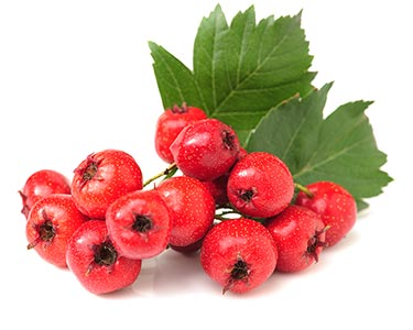 ophiopogon-japonicus-herbal-supplement-ingredient.jpg