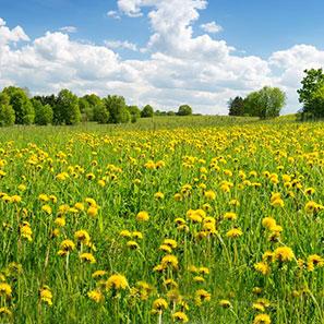 herbal-remedies-for-spring.jpg