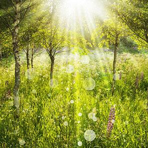 herbal-remedies-for-summer.jpg