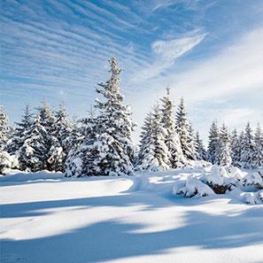 herbal-remedies-for-winter.jpg