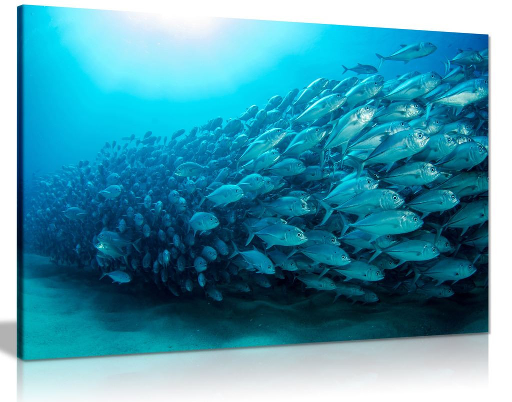 Blue School Of Fish Ocean Canvas Wall Art Picture Print
