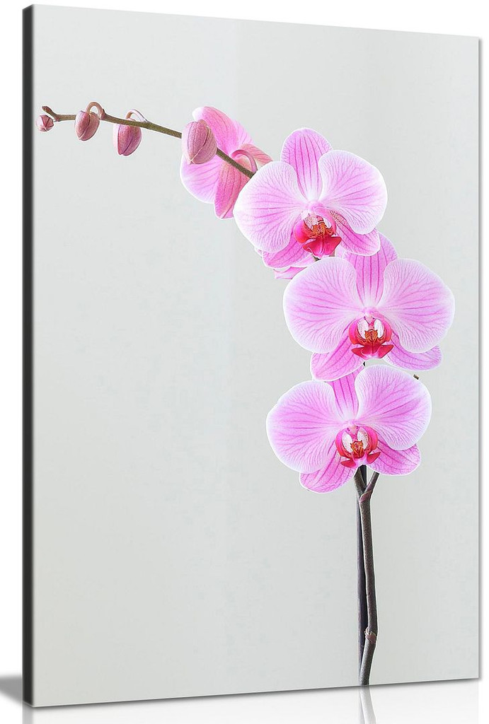 Purple Wall Art Orchid Flowers Home Decor Canvas