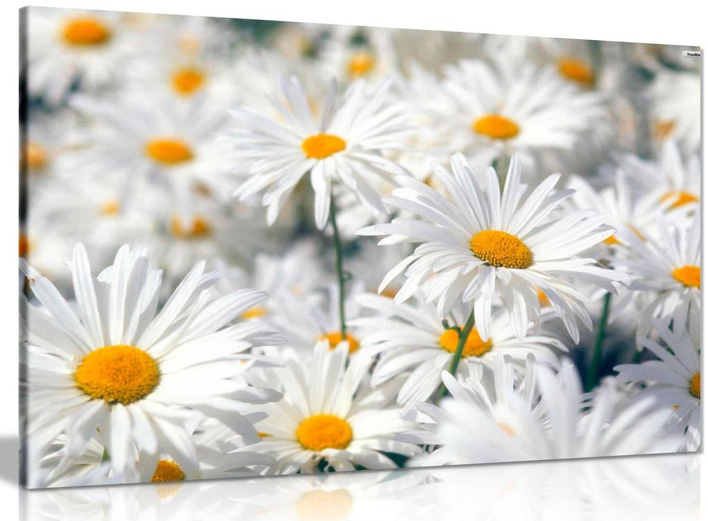 Daisys Daisy Canvas