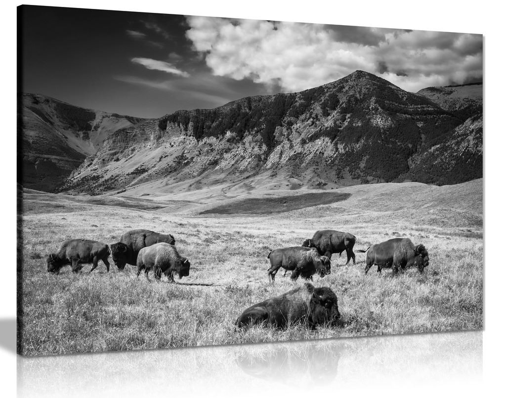 Black & White Wall Art Buffalo Grazing Mountain Landscape Canvas
