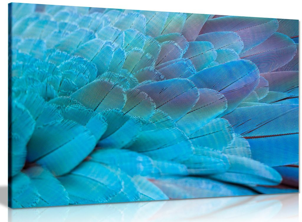 Abstract Blue Art Tropical Parrot Feathers Canvas