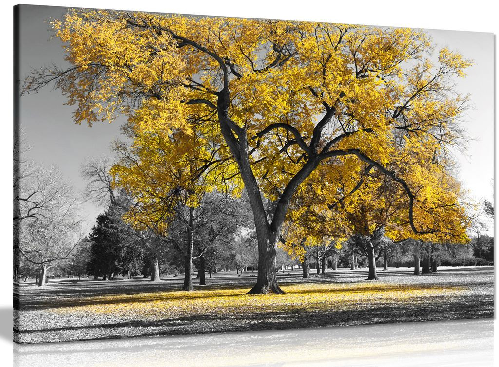 Large Tree Yellow Leaves Black White Nature Canvas