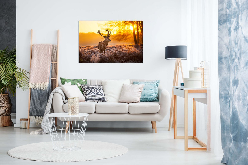 Red Deer In Morning Sun Canvas