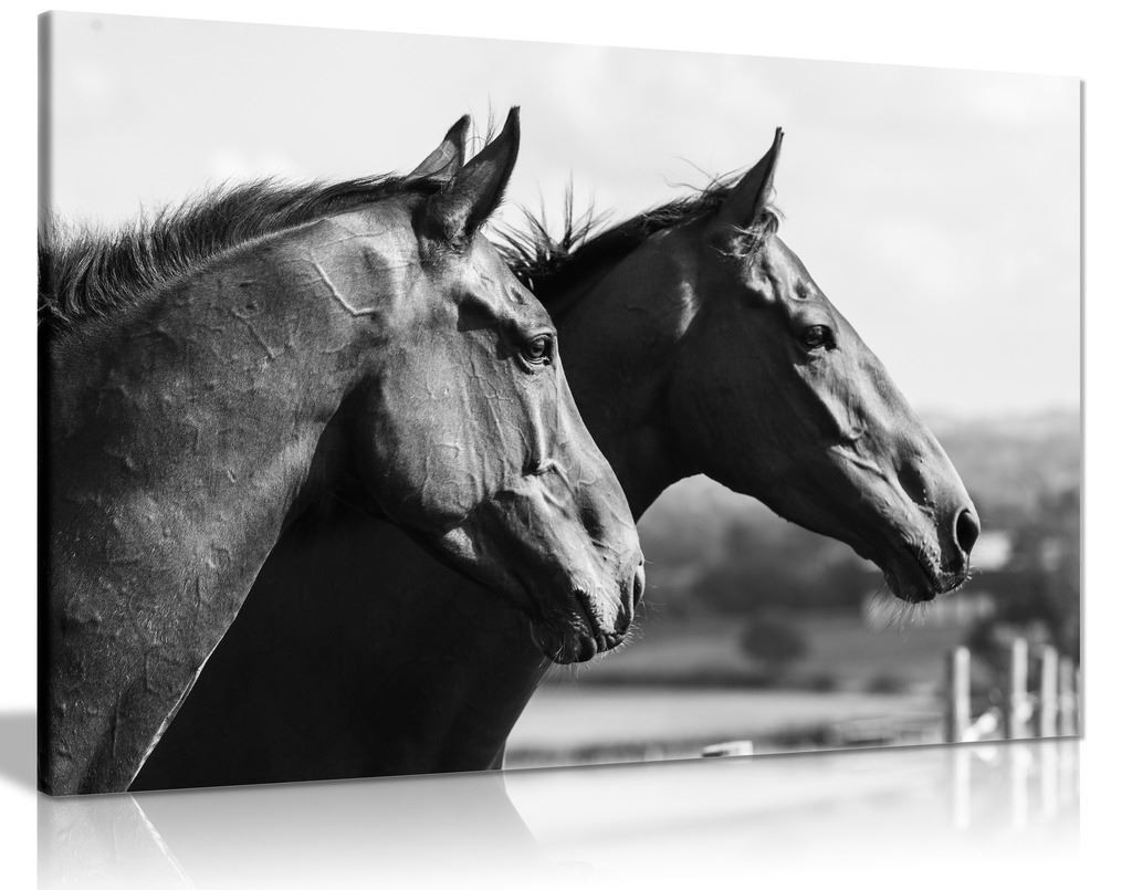 Two Black & White Horses Canvas Wall Art Picture Print