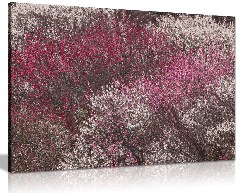 Plum Trees Canvas Wall Art Picture Print