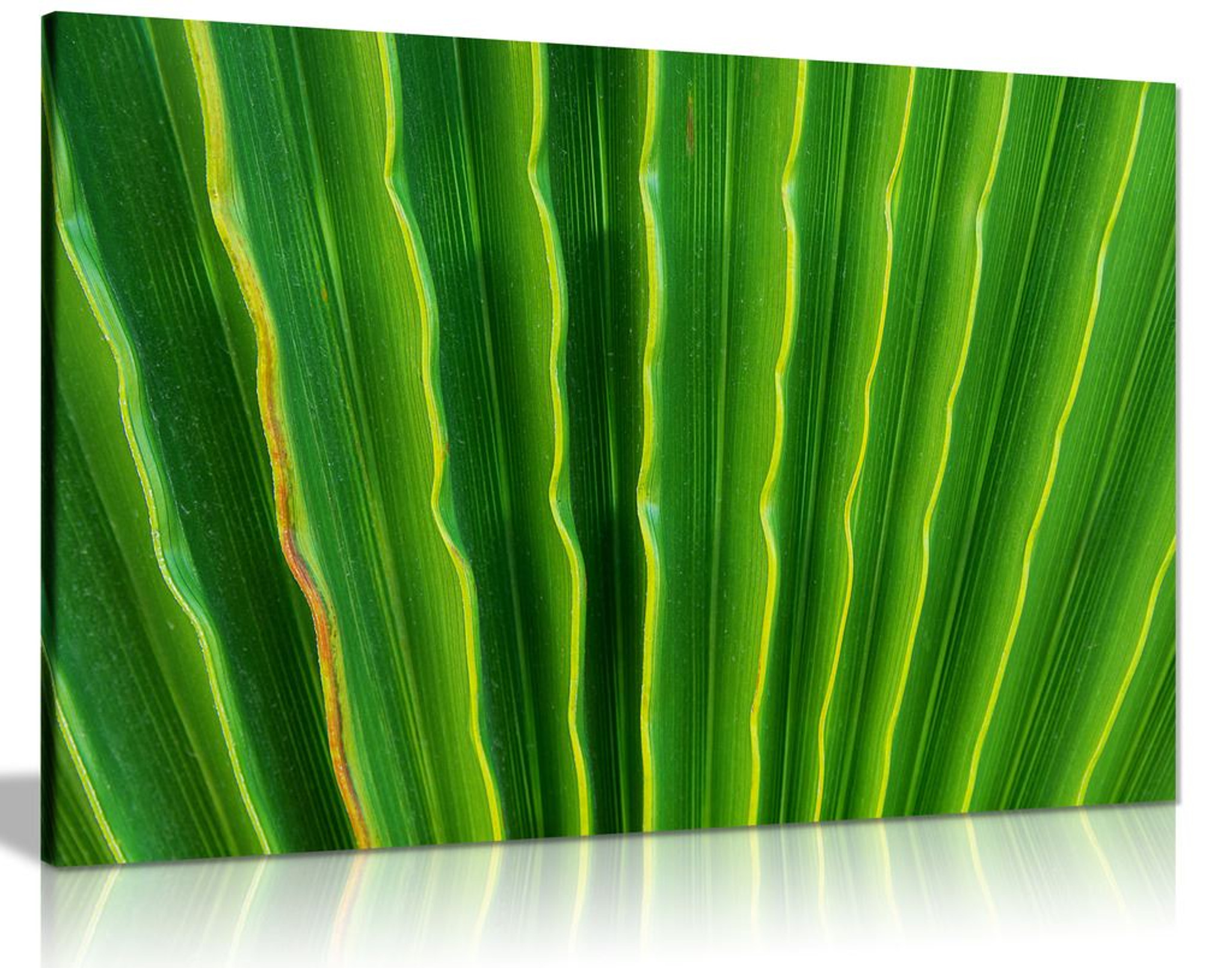 Green Ripple Tropical Palm Leaves Canvas Wall Art Picture Print