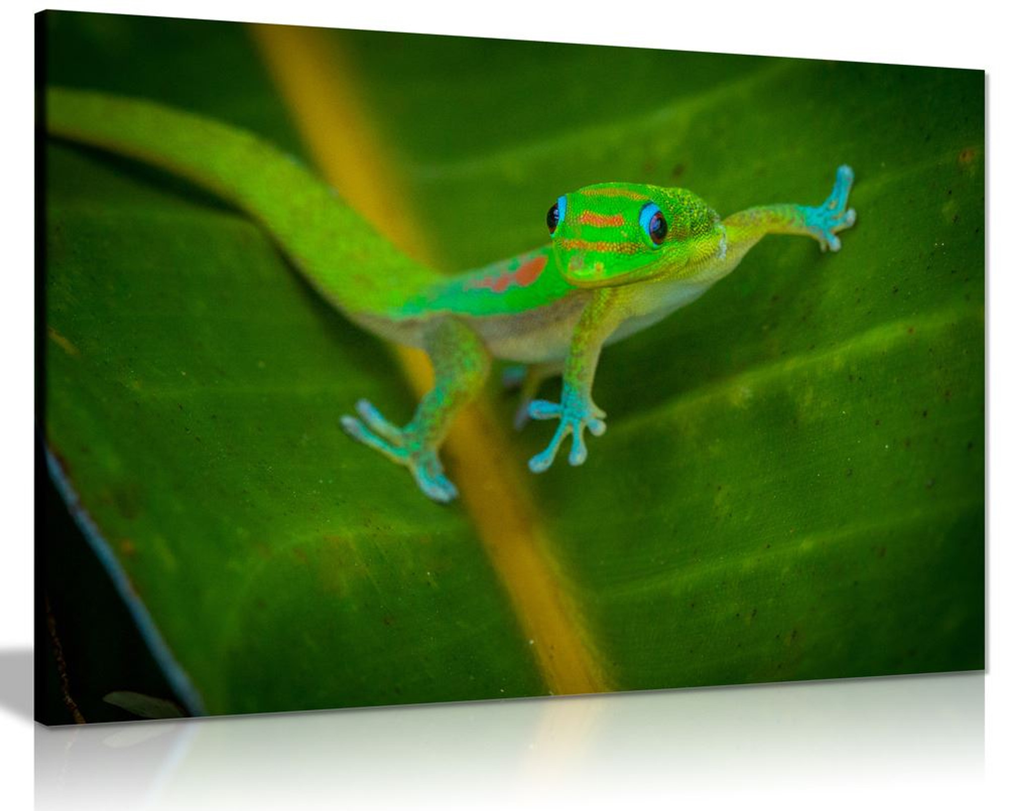 Gecko Canvas Wall Art Picture Print