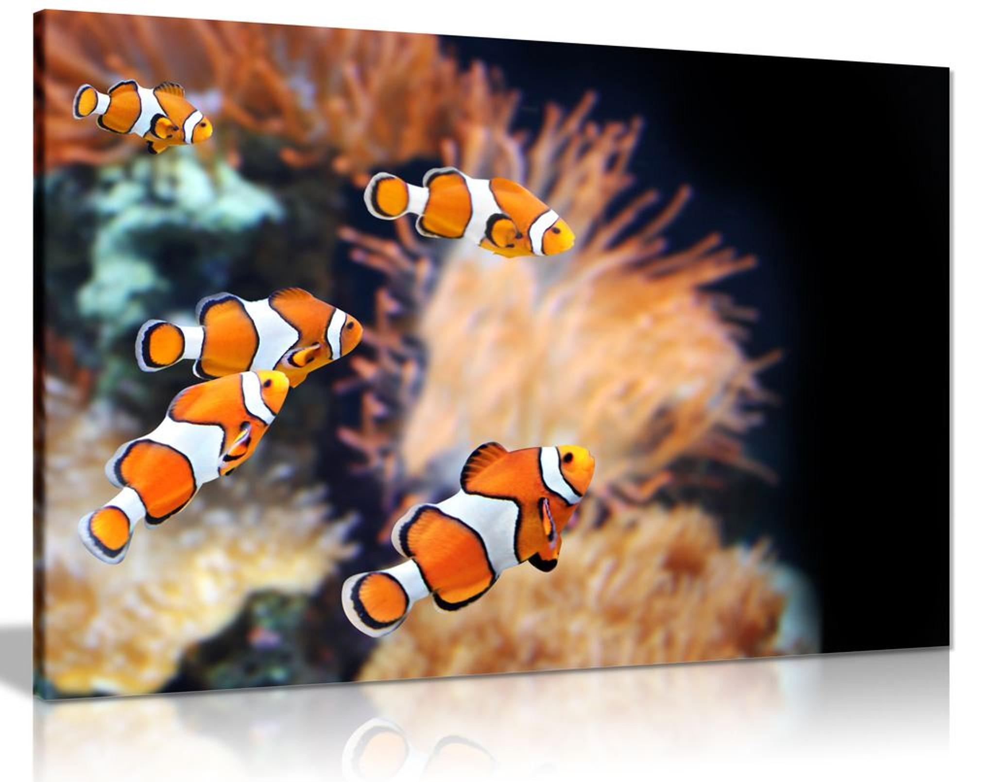 Clown Fish Canvas Wall Art Picture Print
