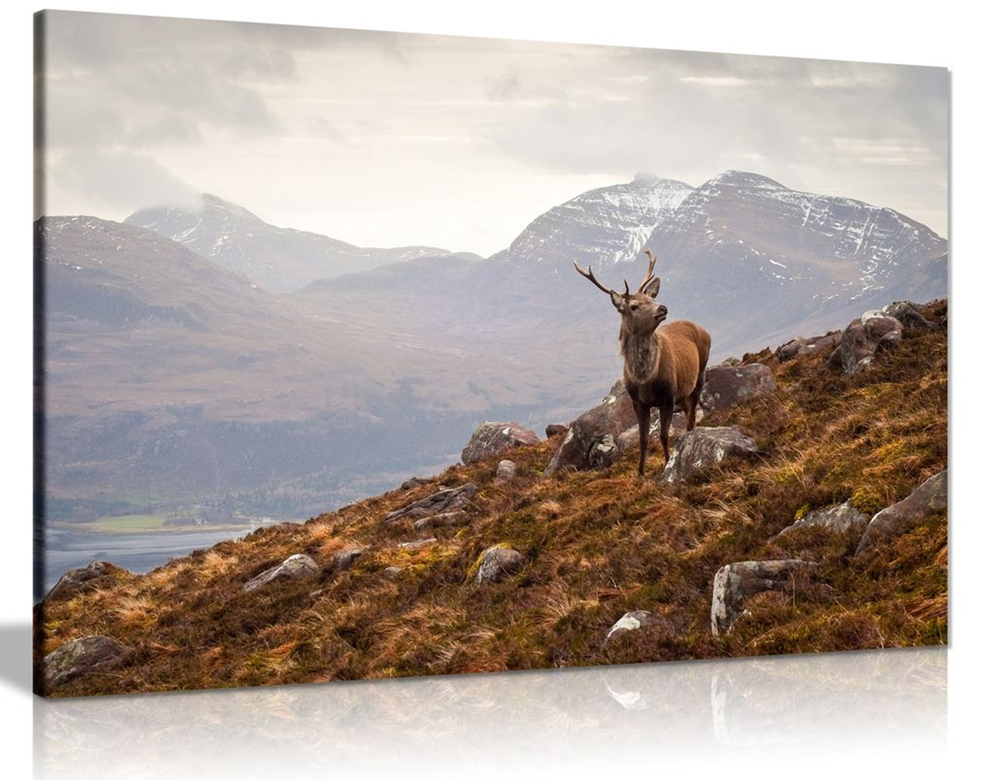 Wild Stag, Scottish Highlands Canvas