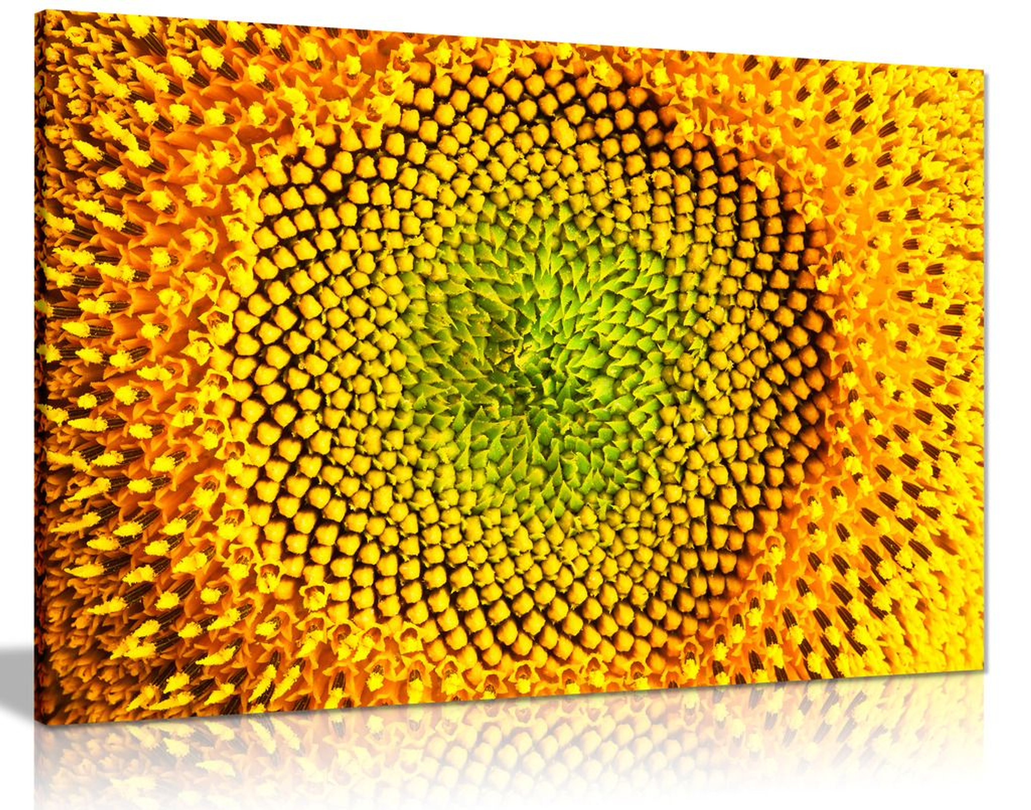 Yellow Sunflower Closeup Canvas