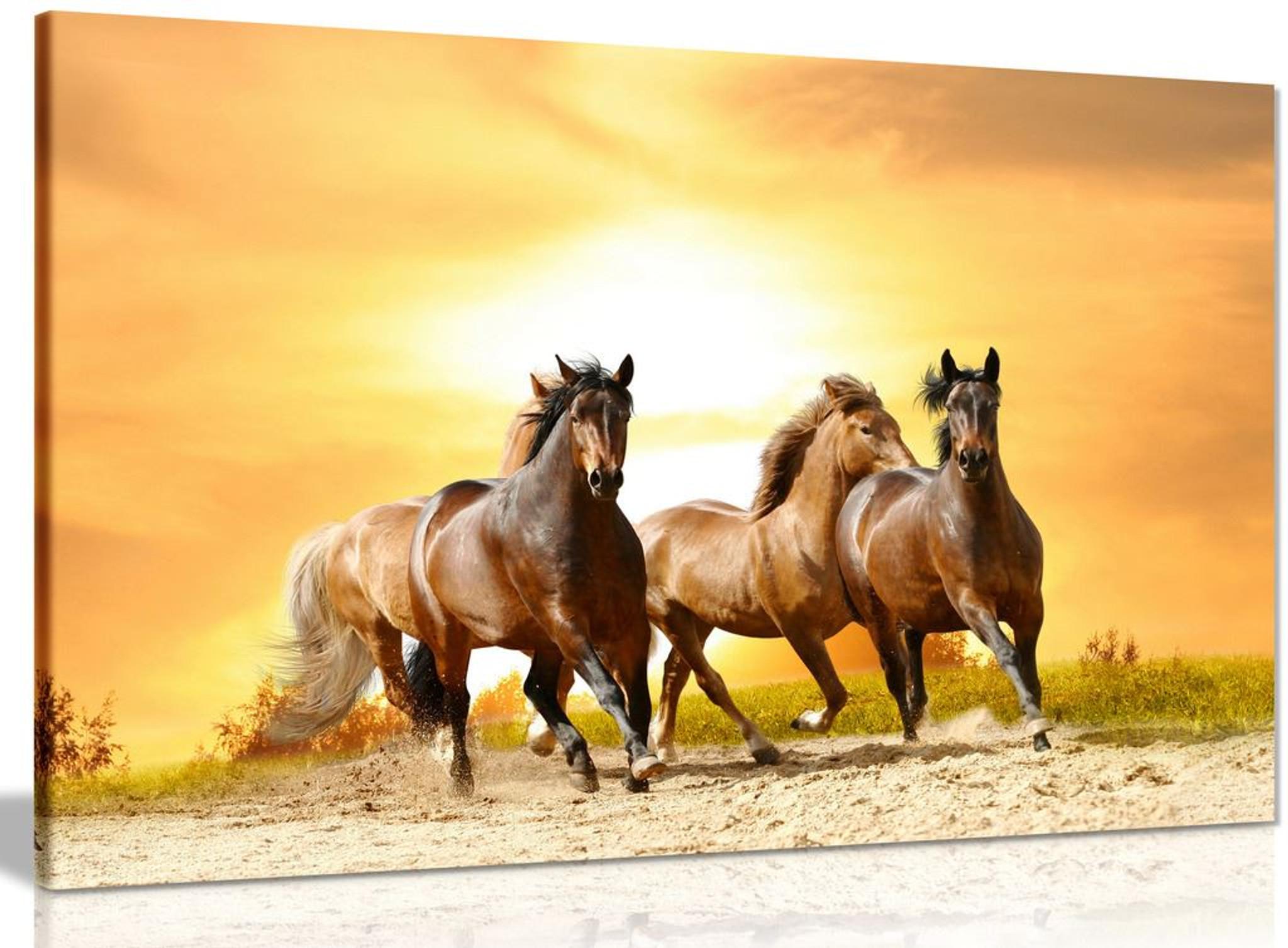 Running Wild Horses Sunset Canvas