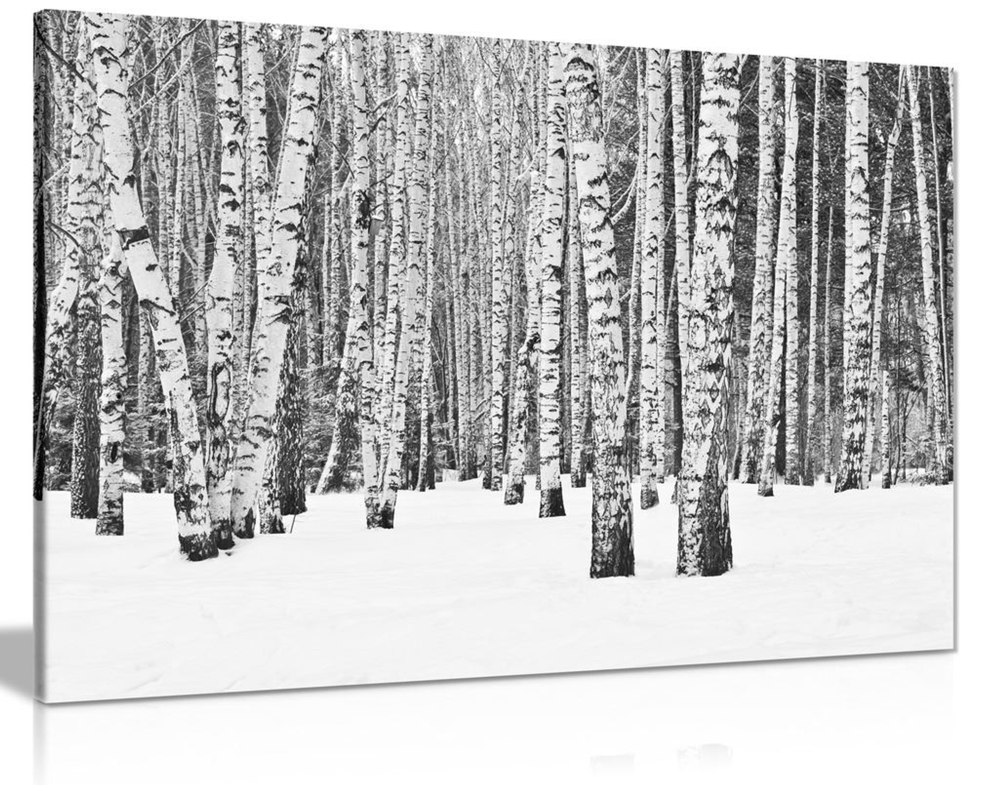 Rustic Art Tree Forest In Winter In Black & White Canvas
