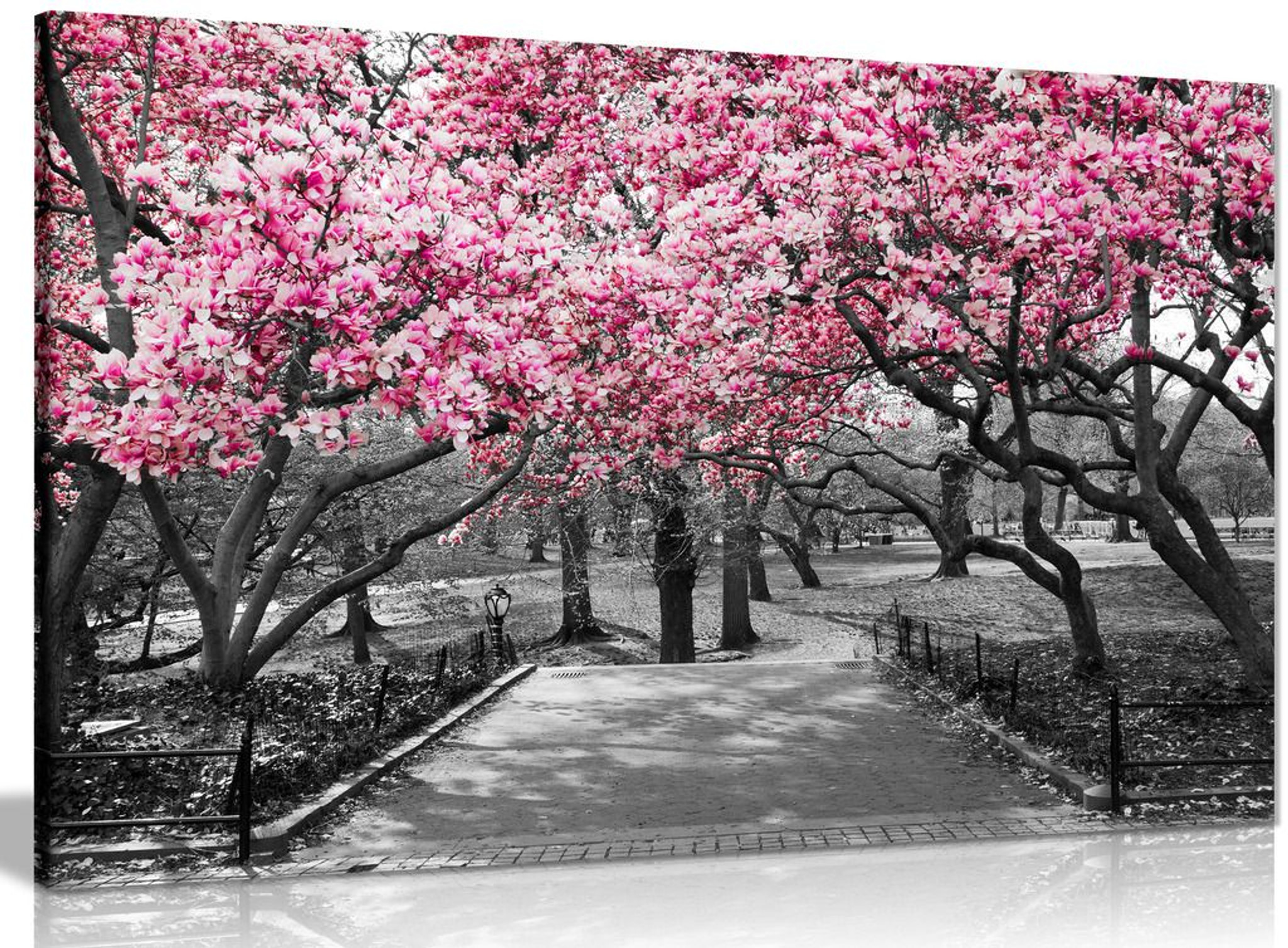 Black & White Wall Art Pink Blossoms Canvas