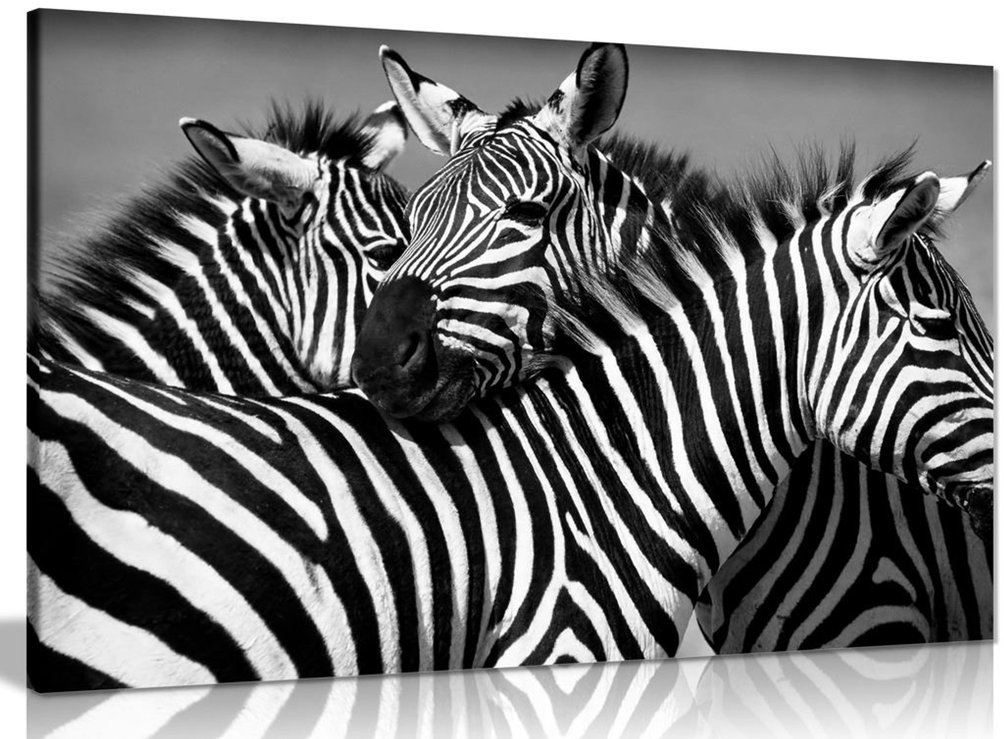 Black & White Zebra Canvas