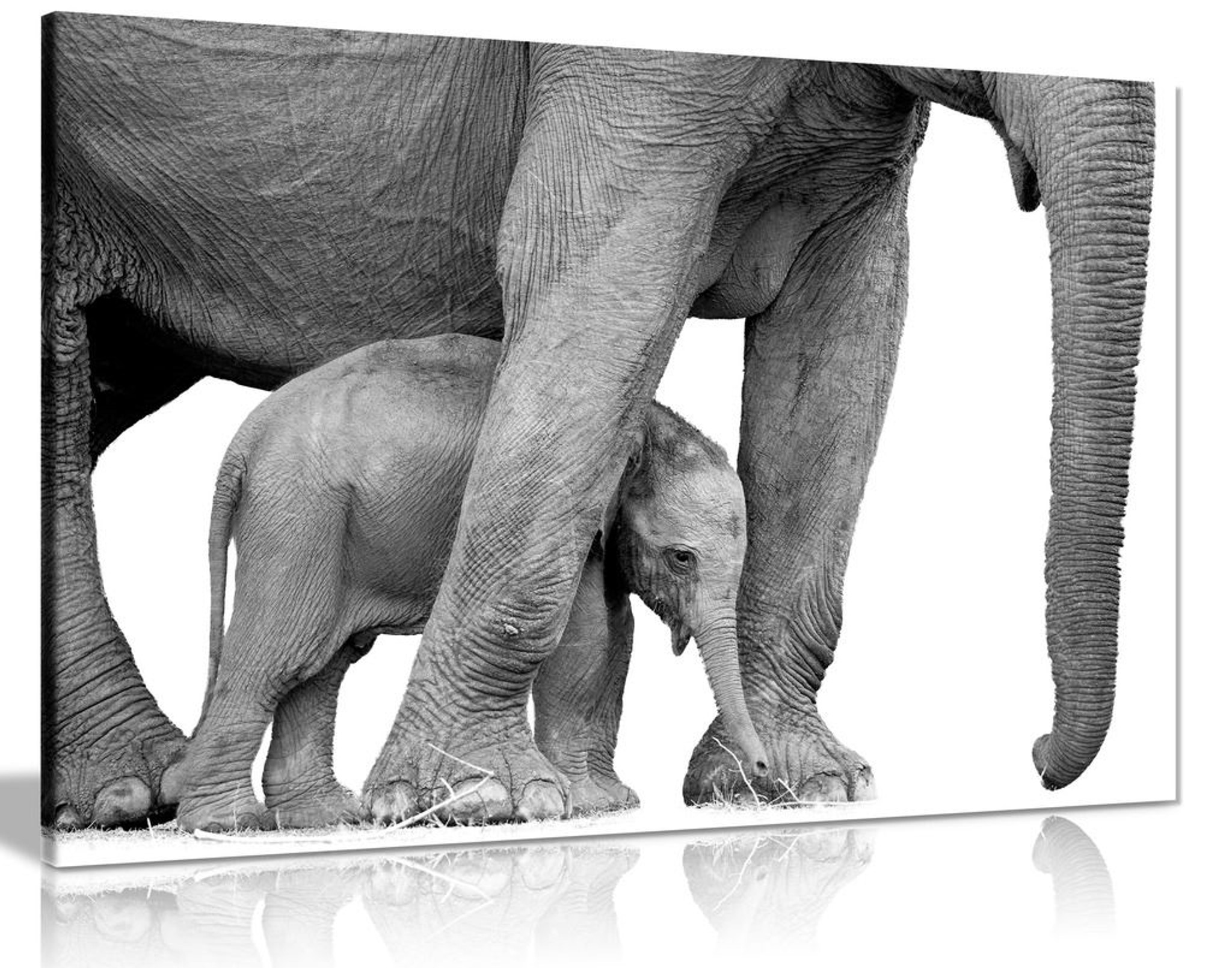 Black And White Photo Of Elephant And Baby Canvas