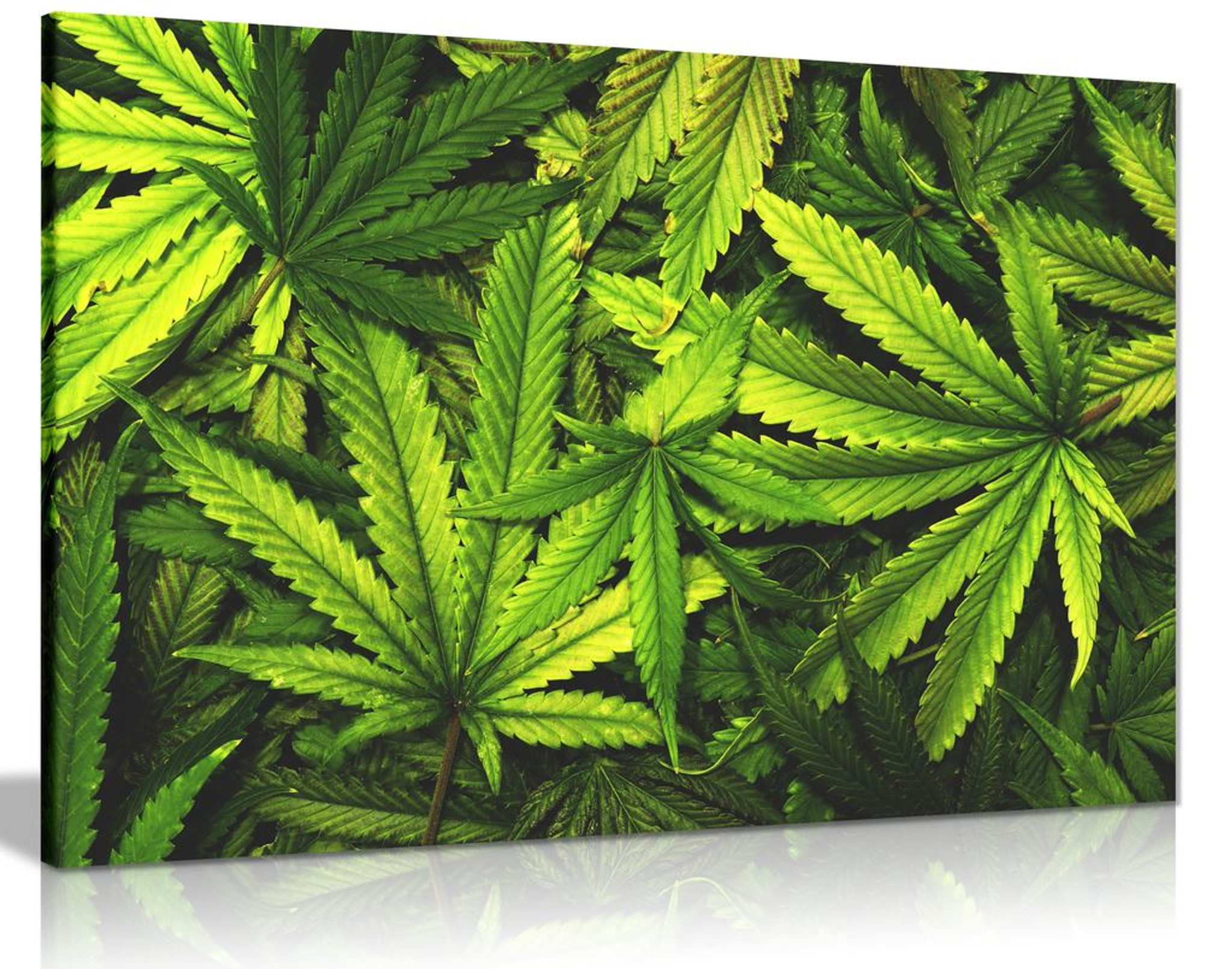 Marijuana Cannabis Leaf Canvas Wall Art Picture Print