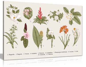 Exotic Botanical Flowers Canvas Wall Art Picture Print