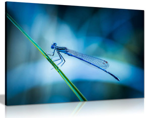 Dragonfly Blue Green Canvas Wall Art Picture Print