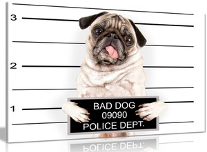 Pug Bad Dog Canvas