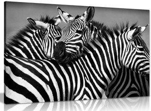 Black & White Zebra Canvas