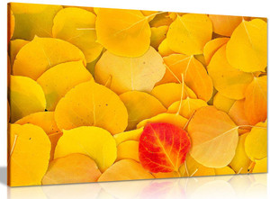 Yellow Leaves Canvas