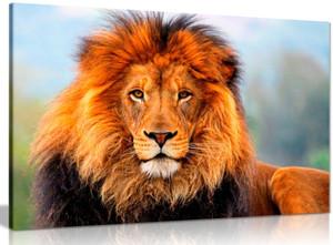 Wild African Lion Canvas