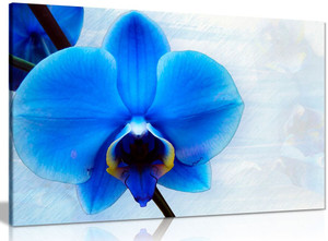 Blue Orchid Flower Canvas