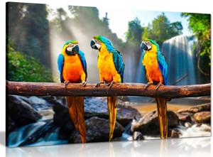 Colourful Parrots Macaws Canvas