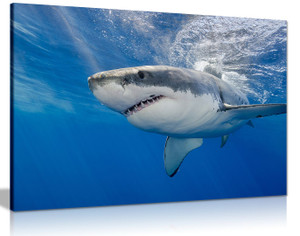 Shark Underwater Blue Canvas