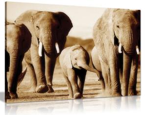 Elephants Brown Sepia Canvas
