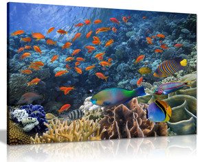 Tropical Fish On Coral Reef Canvas Wall Art Picture Print