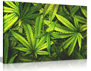 Marijuana Cannabis Leaf Canvas Wall Art Picture Print