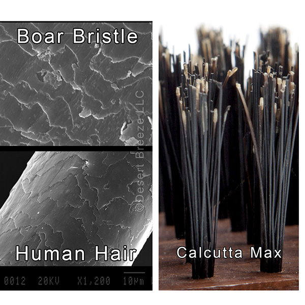 micro-boar-bristle-human-hair-comparison-600.jpg