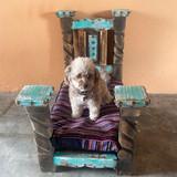 Dandy Dog Bed