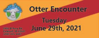 Otter Encounter 6/29/2021