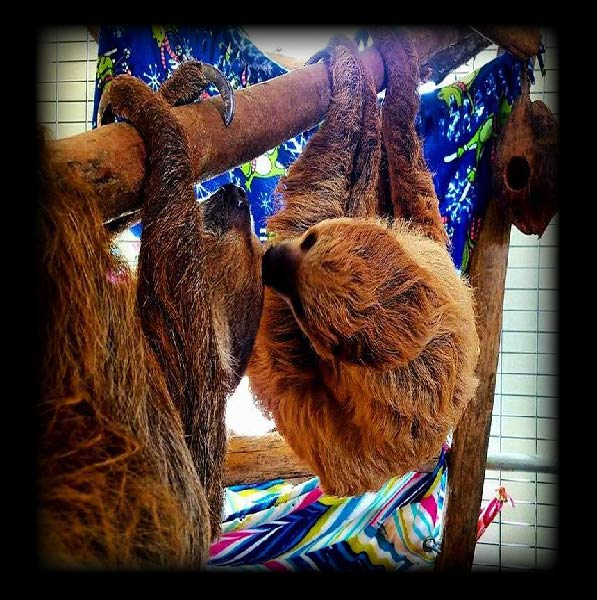 sloth-encounter-image-01.jpg