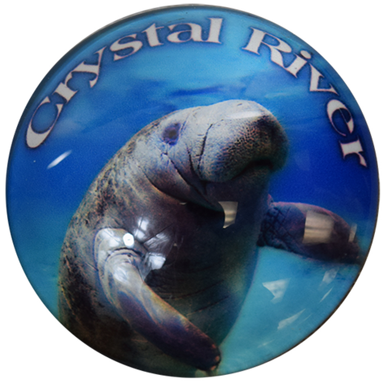 """Round """"Crystal River"""" Glass Manatee Magnet - Get 2"""