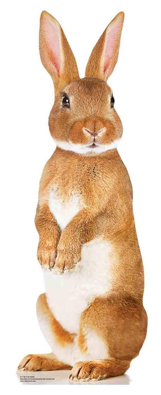 Cute Brown Rabbit Mini Cardboard Cutout Standee Stand Up