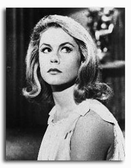(SS235248) Elizabeth Montgomery  Johnny Cool Movie Photo