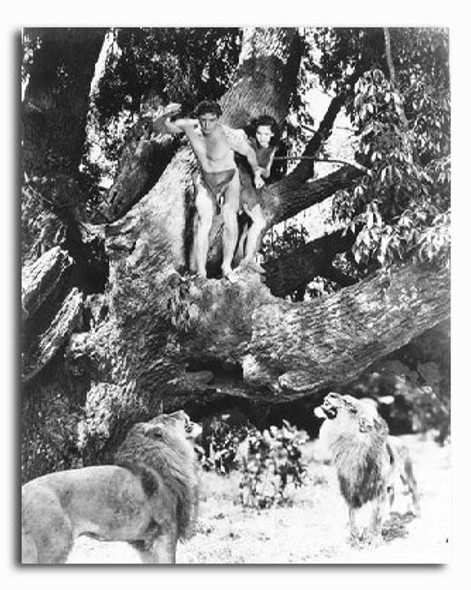 (SS2226627) Johnny Weissmuller  Tarzan and His Mate Movie Photo