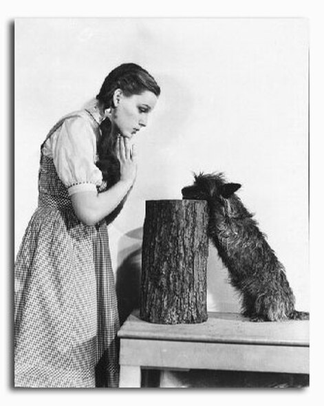 (SS2227030) Judy Garland  The Wizard of Oz Movie Photo