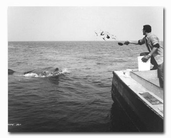 (SS2419053) Roy Scheider  Jaws Movie Photo