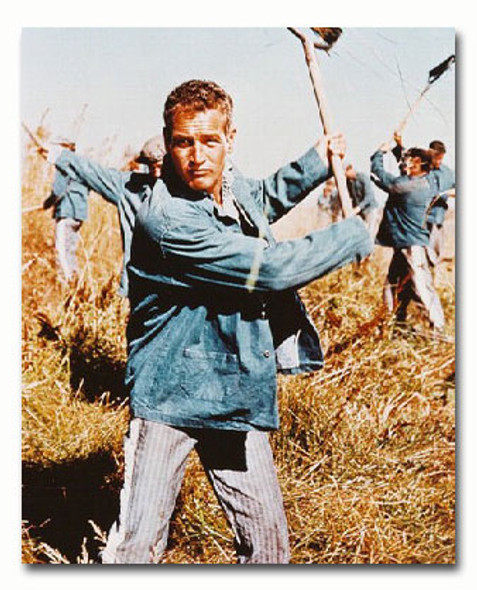 (SS2834390) Paul Newman  Cool Hand Luke Movie Photo