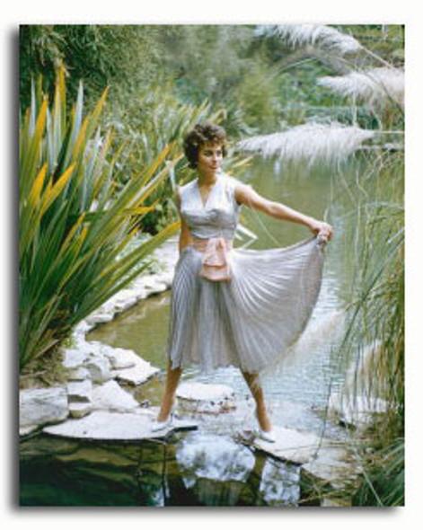 (SS3338491) Sophia Loren Movie Photo