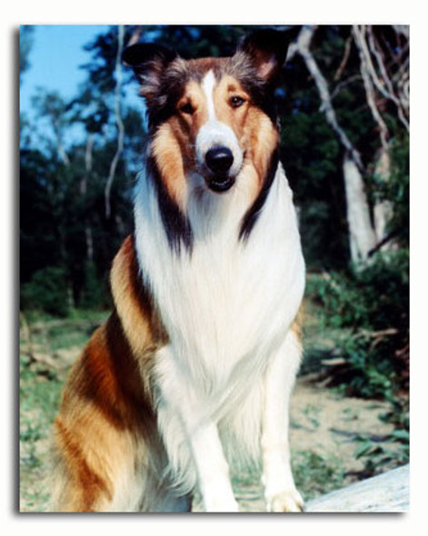 (SS3570008)  Lassie Television Photo