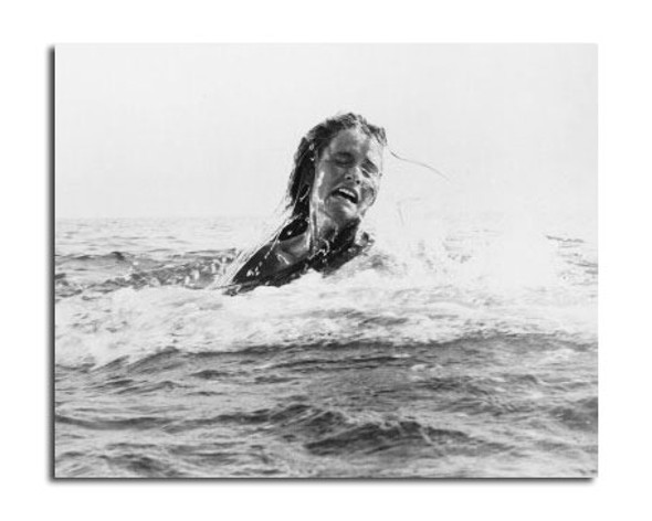 Jaws Movie Photo (SS2457351)